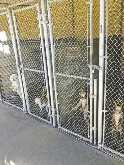 YAPS, rescue facility, saving animals since 1957
