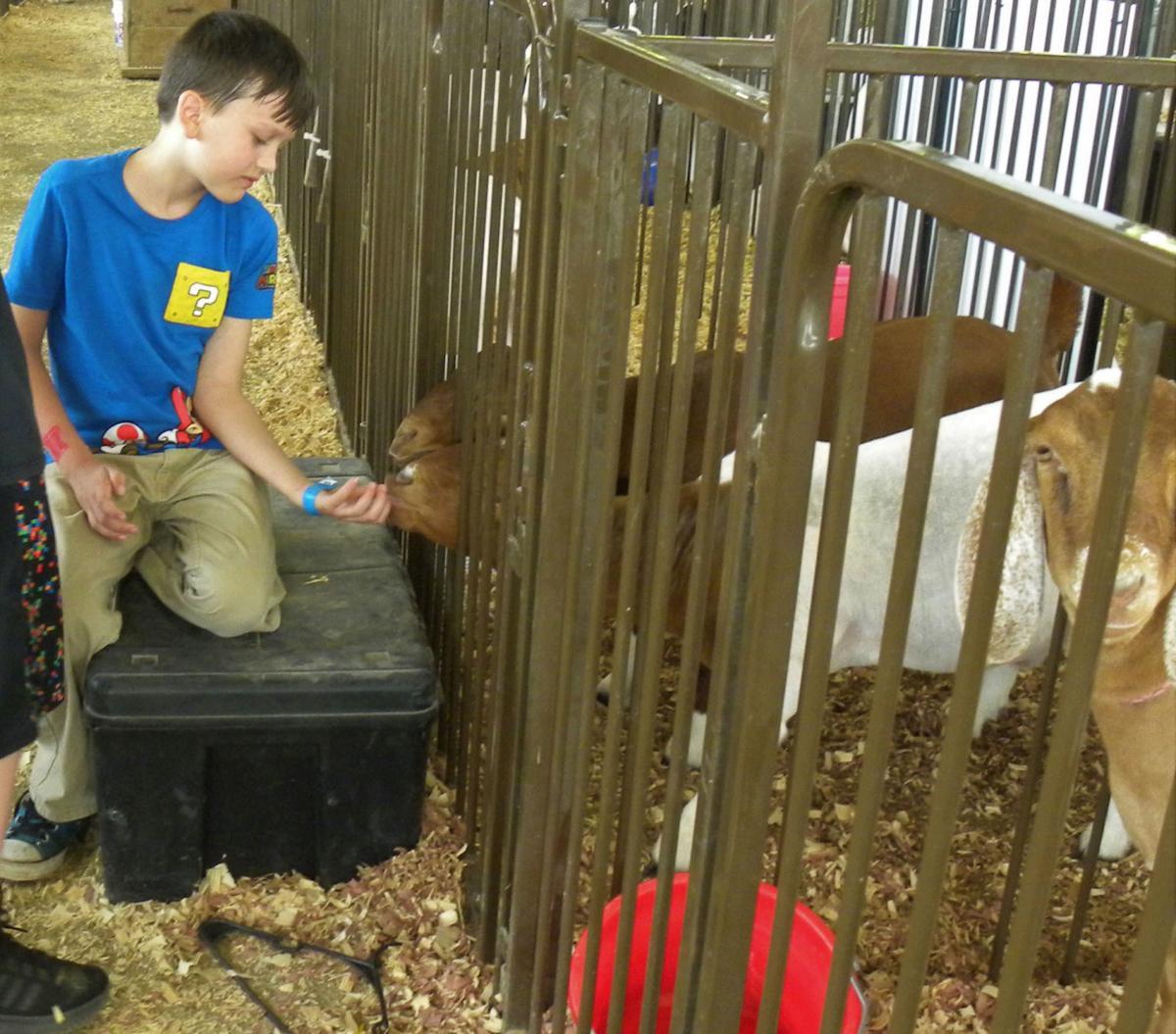 Fair 2019 - Boy and Goats