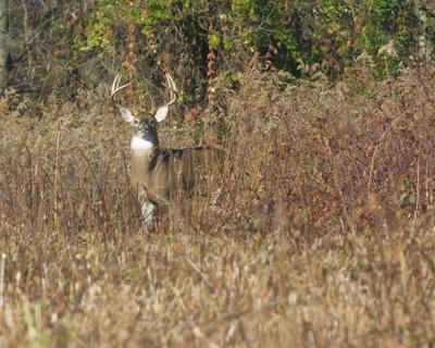 ODNR deer photo