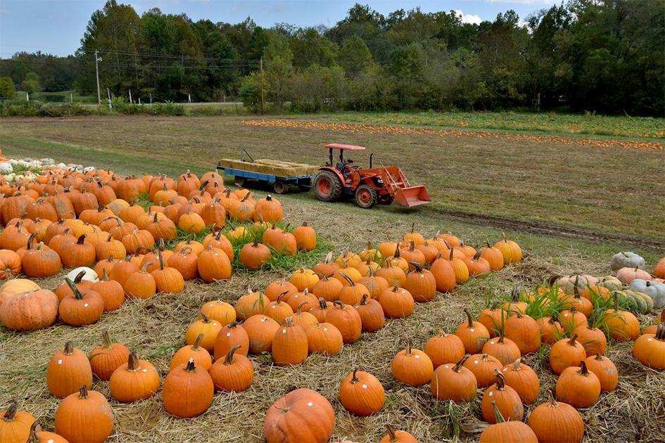 Trick-or-Treat: Variety of fall activities, Halloween festivities planned in Pike County | News ...