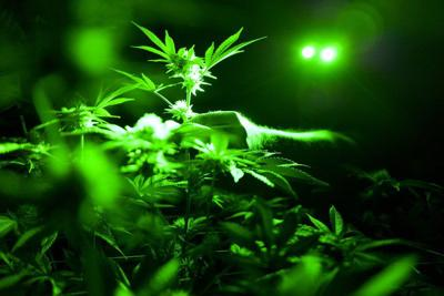 Police: decriminalization is no green light for weed
