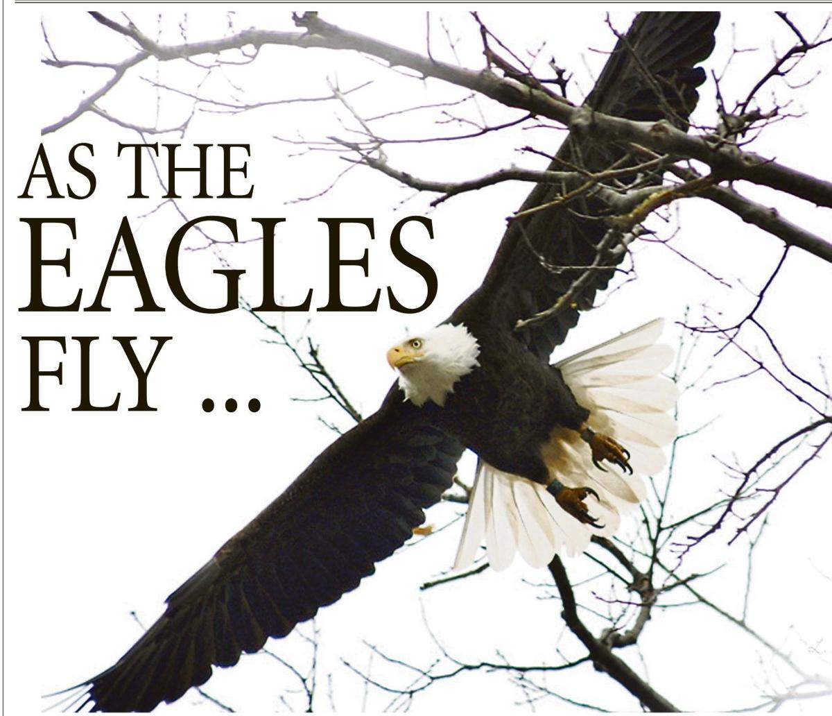 THE EAGLES ARE LANDING: A few of the majestic birds have returned to ...