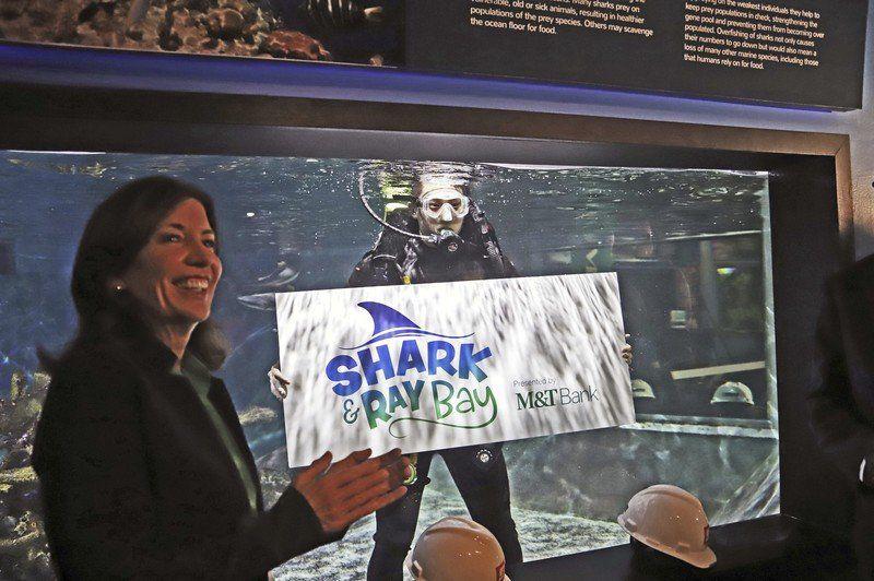 Interactive shark and ray bay heading to Aquarium of Niagara