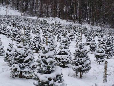 Welcome Centersadorned with state Christmas trees