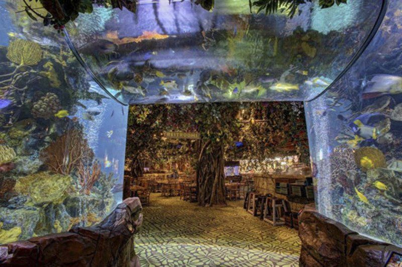 Rainforest Cafe At Sheraton At The Falls