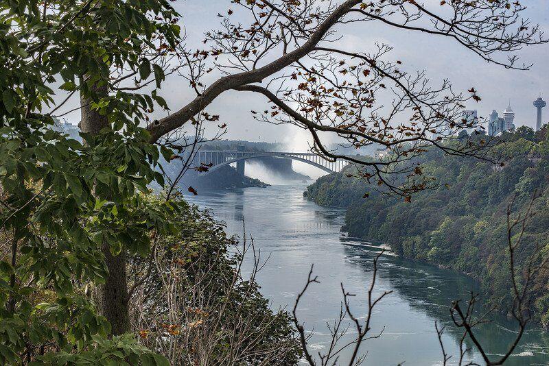 Rareinsect found in Niagara Gorge