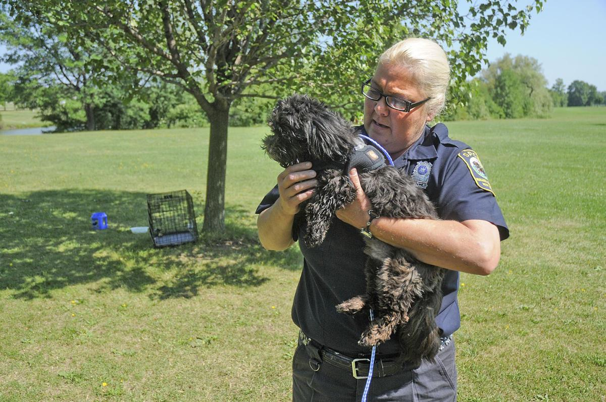 SPCA comes to rescue of dog left at Hyde Park | Local News