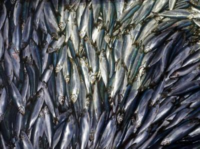Study says warming may reduce sea life by 17%