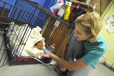Nia Abused Dogs Folo art 2 070313