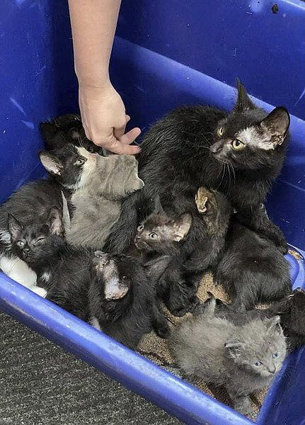 Community reminded not to post free kittens online