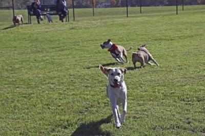 Dog park opens at DeVeaux Woods State Park