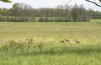 DEC sets new deer feeding regulations