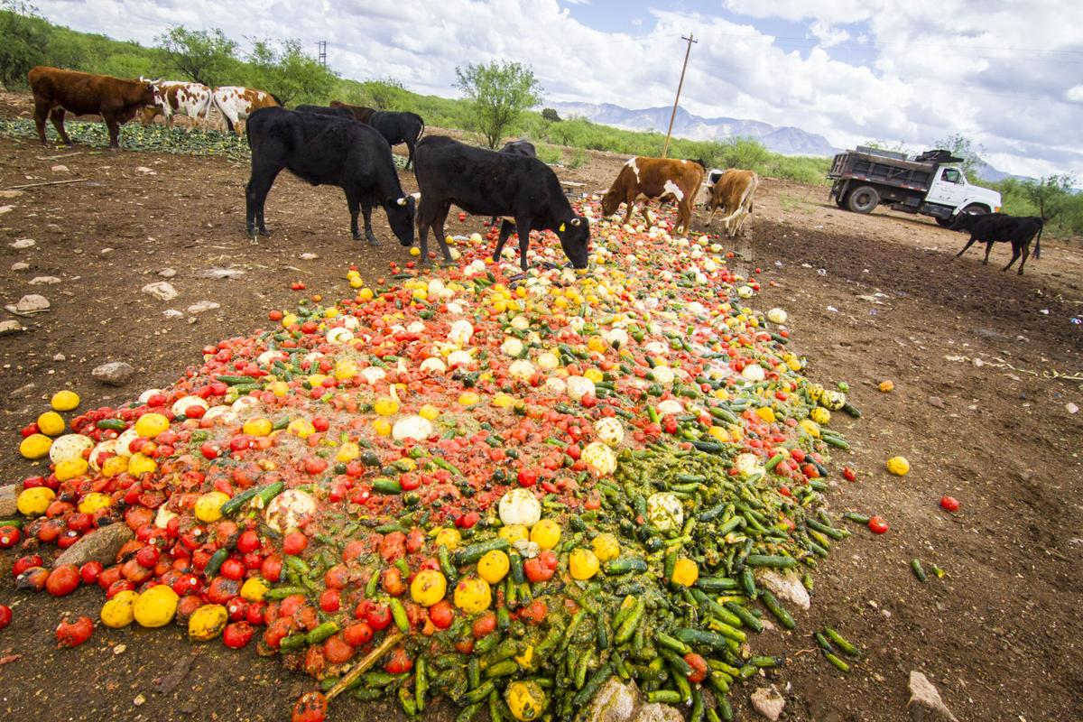 hungry cows keep food waste out of landfill local news stories
