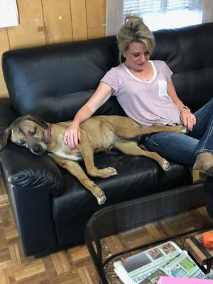 Dog found in Rio Rico reunited with California family