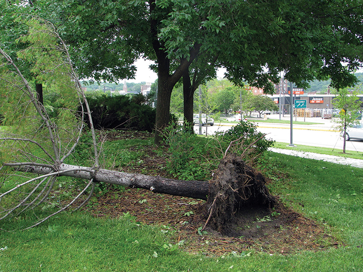 iowa state university extension dealing with tree damage after the