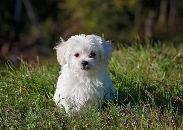 buddy dog hero story