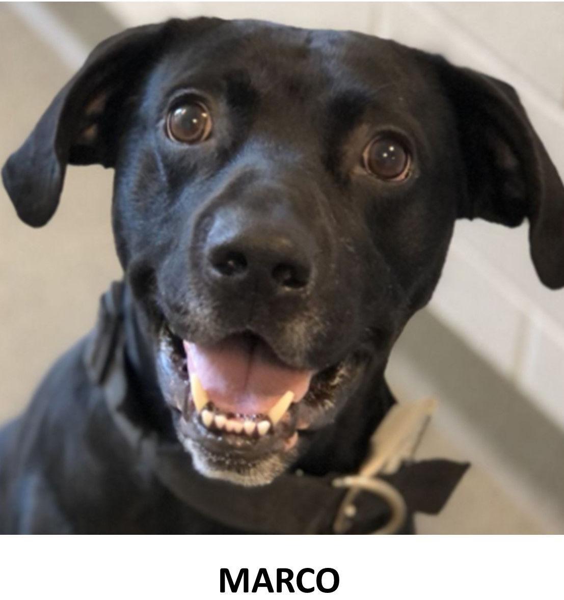 Nonpareil pet pics Marco 11-21-2020.jpg