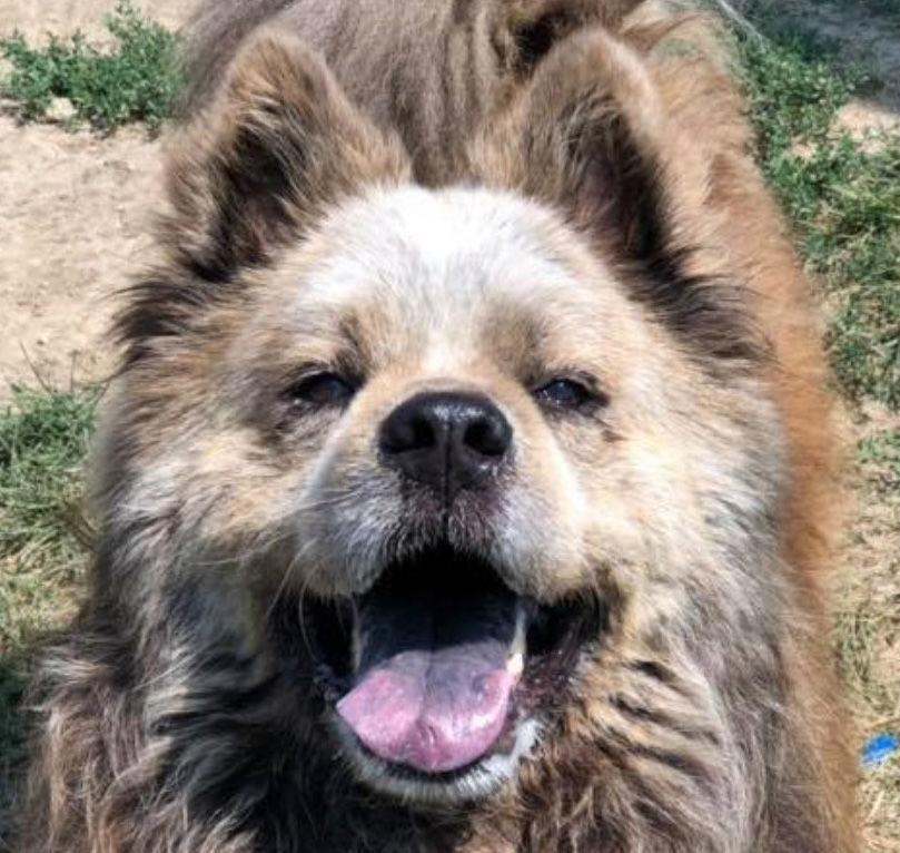 -Nonpareil pet pics Gizmo 8-10.JPGMDW002990271