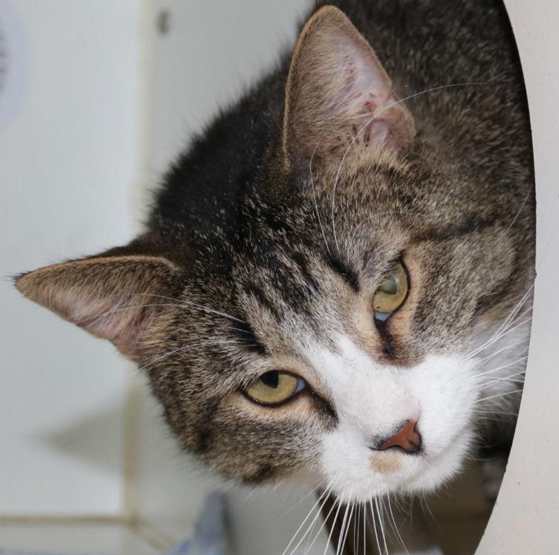 Midlands Cleo cat.jpg