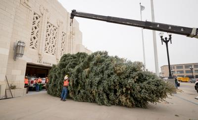 Once A Nuisance 40 Foot Tree Now Will Be On Display At The Durham