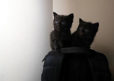 20190512_fotd_fostercats