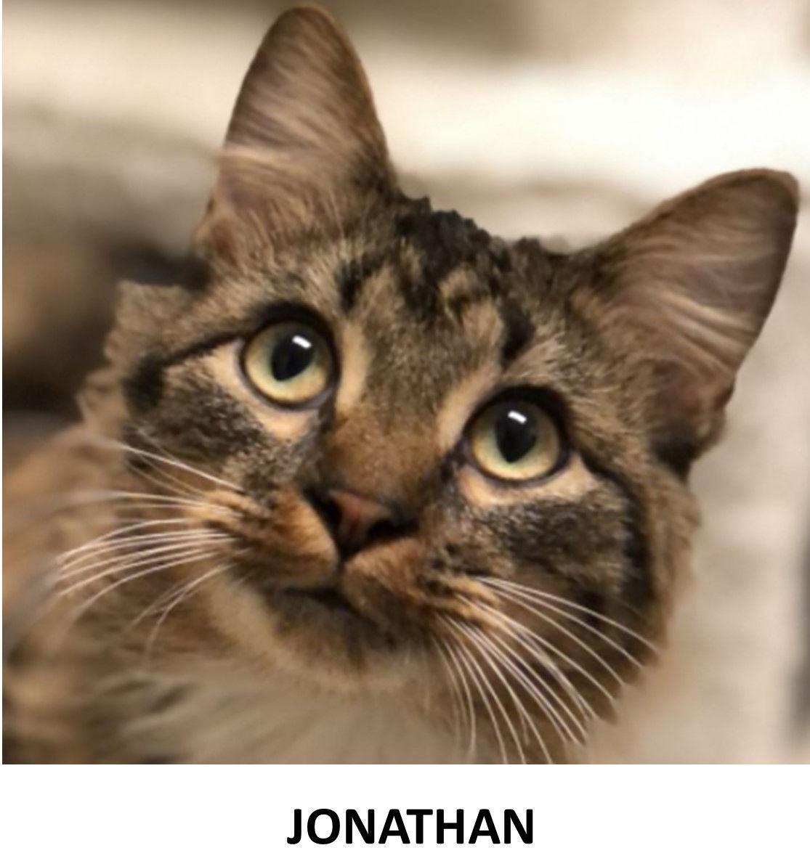 Nonpareil pet pics Jonathan 11-21-2020.jpg