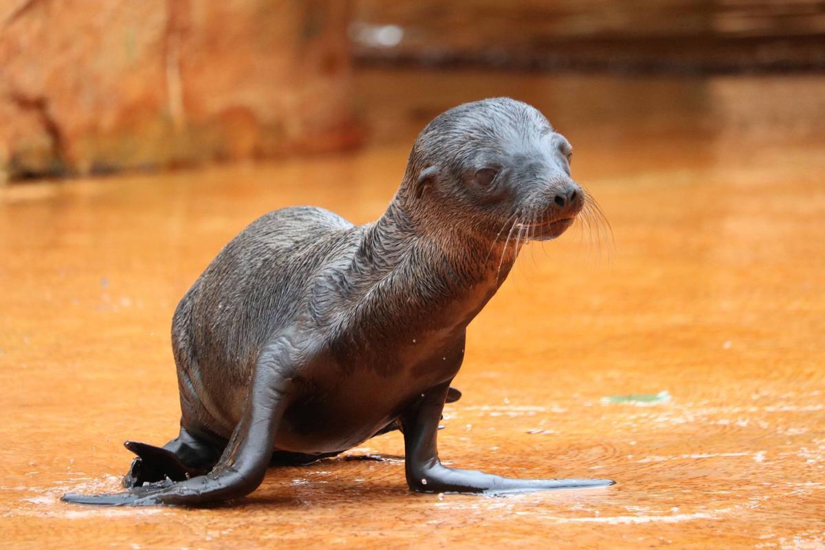 Gemini's pup, born 6-12-19
