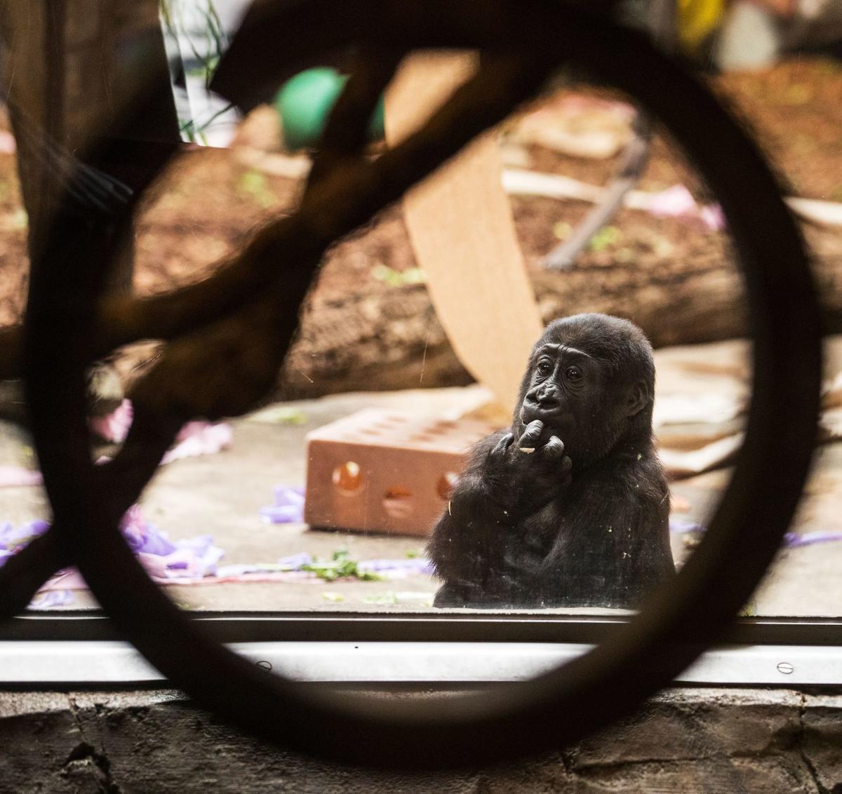 20190601_new_gorilladebut_pic_cm014