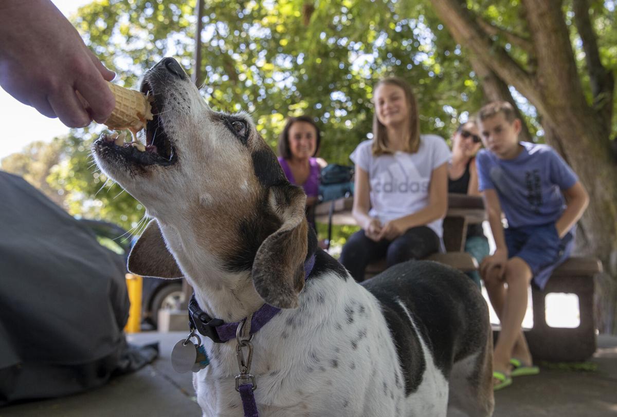Bonnie the beagle-basset hound mix