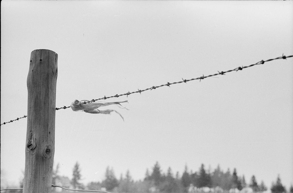 Iowa History: Iowa has link to barbed wire fencing innovation ...