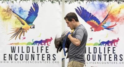 170706_NWS_Library-Wildlife-Encounters2_jshearer.jpg