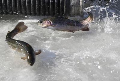 Trout stocking at Big Lake postponed | Local News