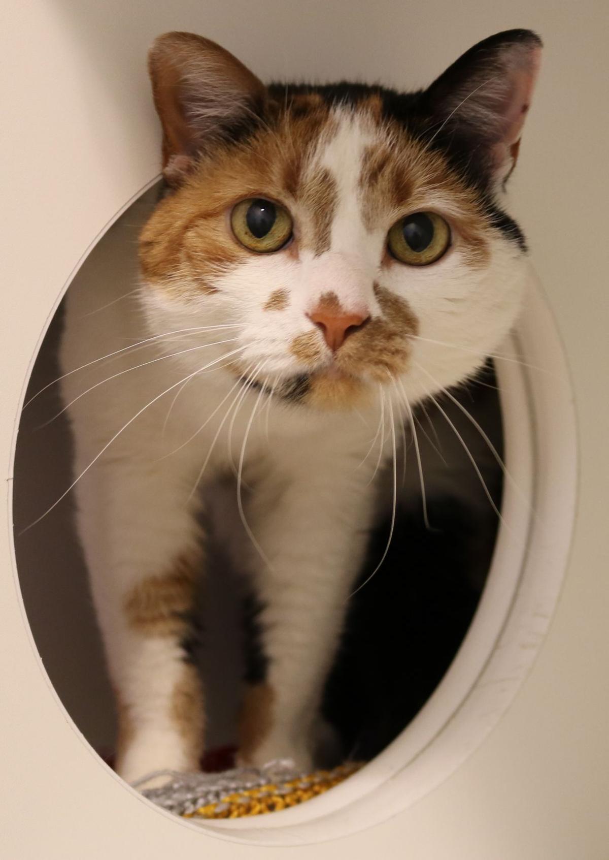 Midlands Humane Society, Pottawattamie County Animal Control have ...