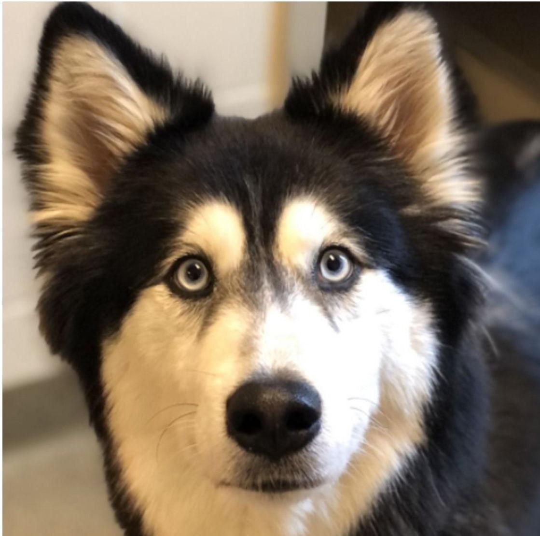 Nonpareil pet pics Luna 4-10-21.jpg
