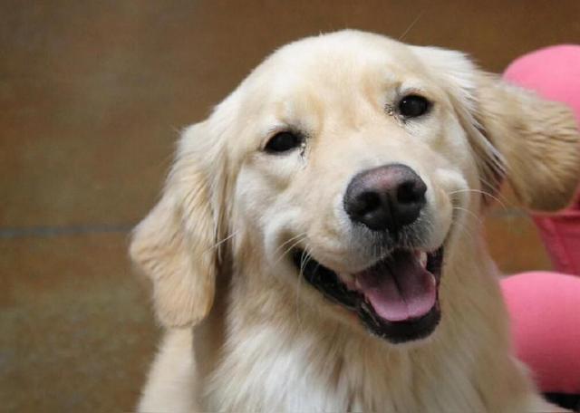 kelsey dog saving human