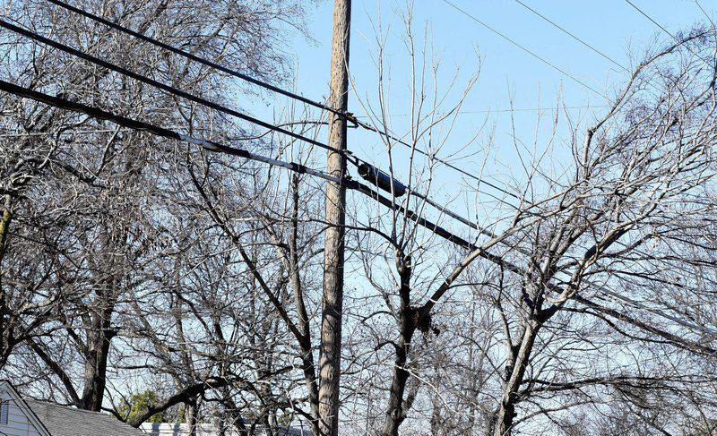 Residents want to stop tree removal