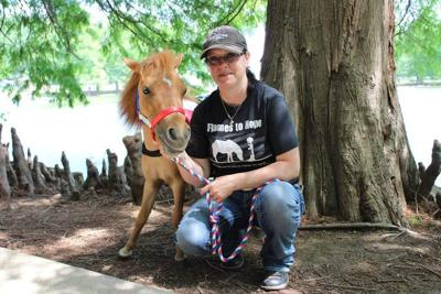 Residents invited to take selfies with mini horse poster