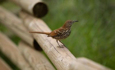 NEXRAD radar used to predict bird collisions