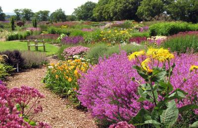 Consider planting a prairie garden