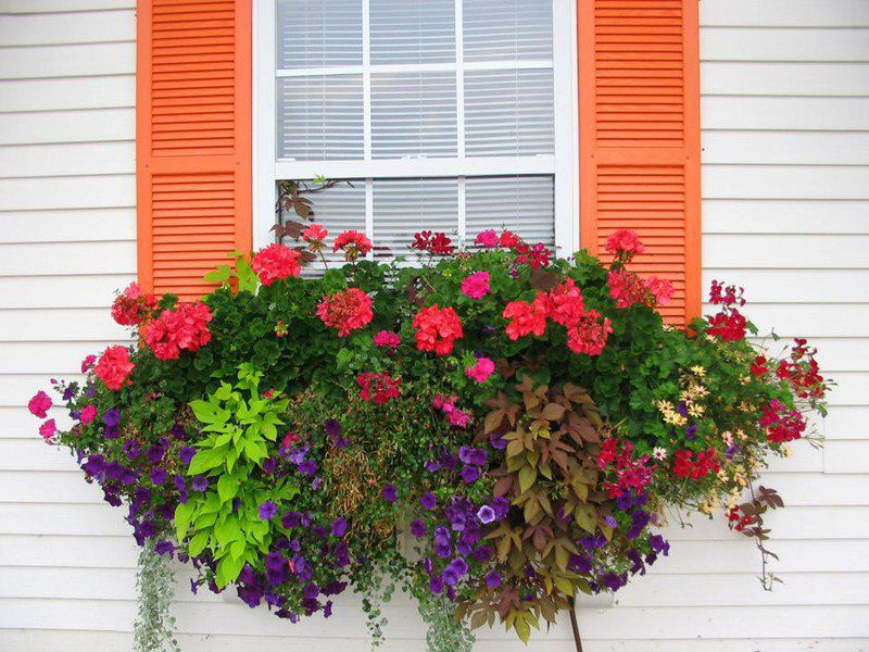 Window boxes can beautify your home