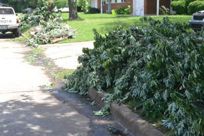 What do to with downed branches, and how to have them picked up