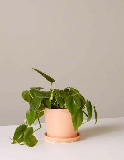 House plants make great gifts for your Valentine