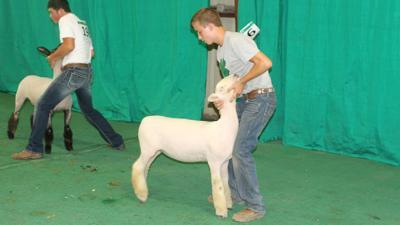 Bruns family makes winning a habit at Lincoln County Fair