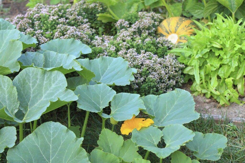 Jacobson: Companion planting can be very beneficial for your garden