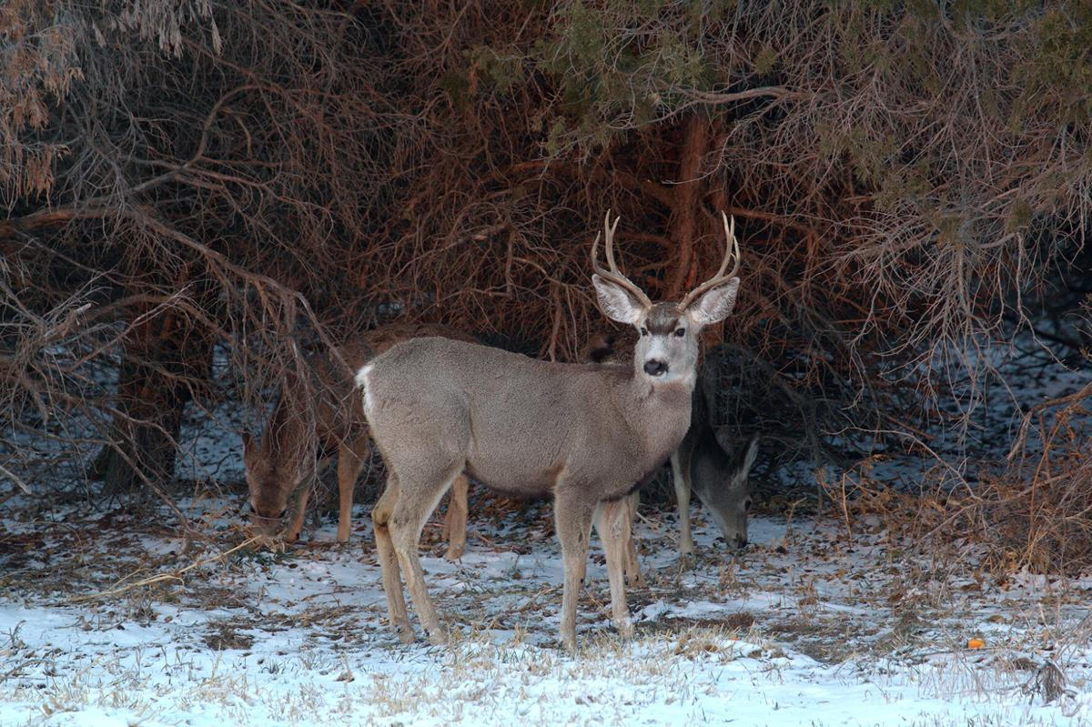 Geiser: Animals may be displaced during the fall