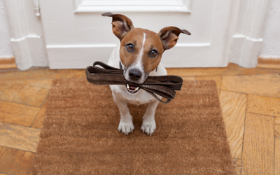 Slow? Fast? Nighttime? Here Are 10 Leashes Perfect For Any Type Of Dog Walk