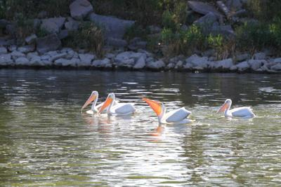 Geiser: Getout and enjoy the spring migration