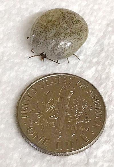Looks like ticks could be a problem this fall