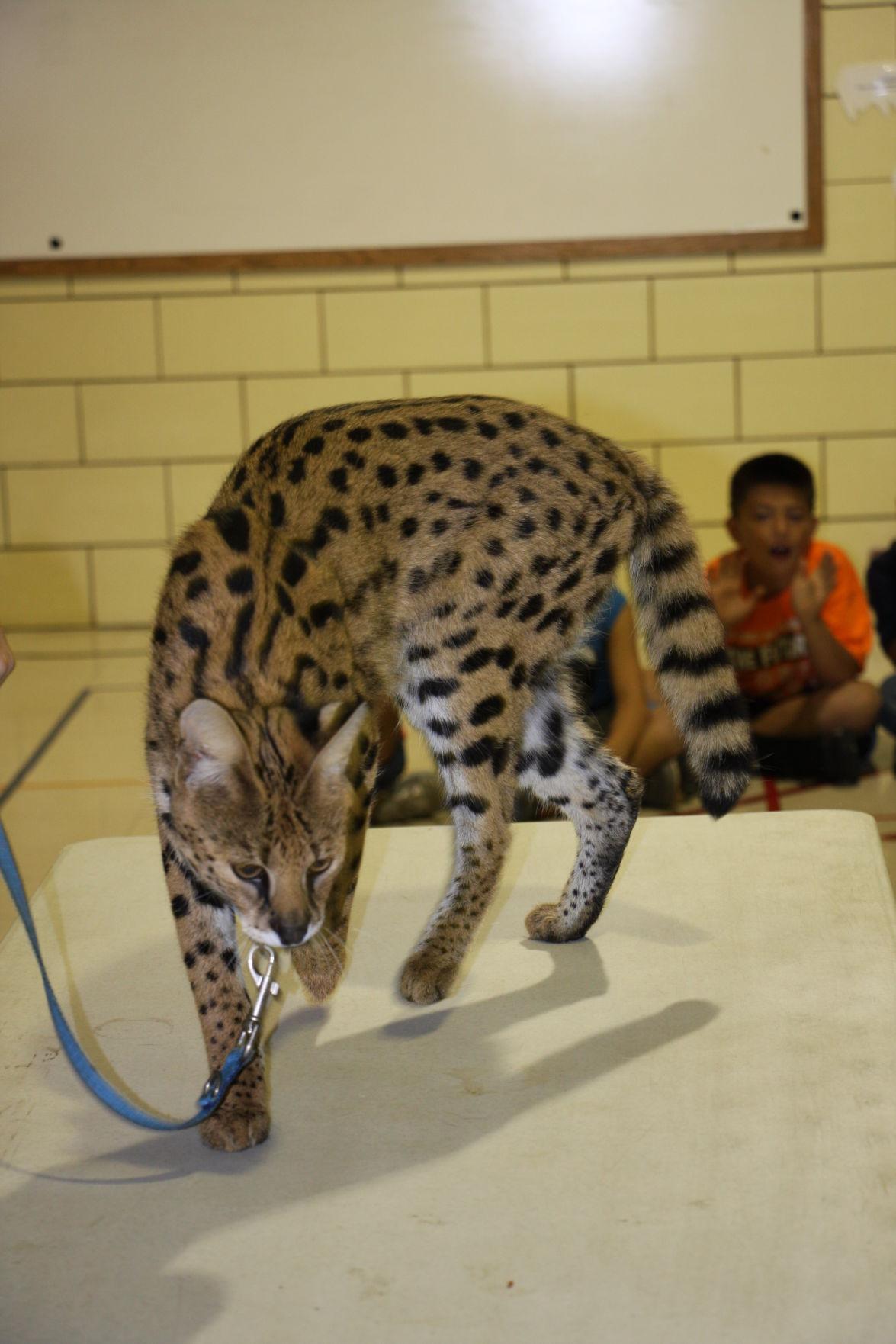 Kids Klub captivated by wildlife presentation