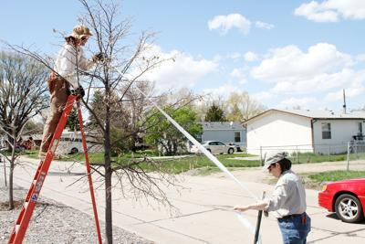 Focus: Improper tree planting is a problem all over